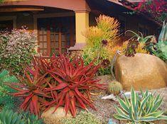 https://flic.kr/p/7kxq47 | Cyndi & Marty's Kensington Garden | Photo, landscape design and installation by Michael Buckner, The Plant Man, San Diego.