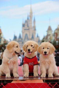 Treasure Buddies disney xmas parade I'd love to meet them at the Disney parks.