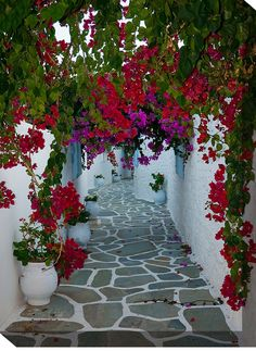 Bougainvillea Path Rename Photographic Print on Wrapped Canvas