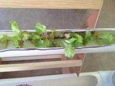acomodando las plantas en la jardinera