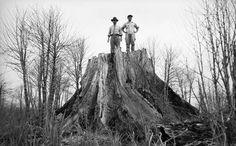 O fotógrafo Haruo Ohara é tema da matéria de hoje no blogLens, do jornal The New York Times. Imigrante japonês, estabeleceu-se em Londrina (PR), em 1929, aos 17 anos, onde se tornou lavrador. Nove anos depois, começou a fotografar, sempre de modo amador, registrando o cotidiano no campo e a memória familiar. Sua obra, commais…