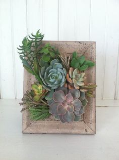 Vertical Succulent Planter by VerticalFlora on Etsy
