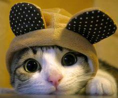 grumpy cat cute cat Love this cat! Baby Animals, Funny Animals, Cute Animals, Animal Jokes, Cute Kittens, Cats And Kittens, Kitty Cats, Bad Kitty, Cats Meowing