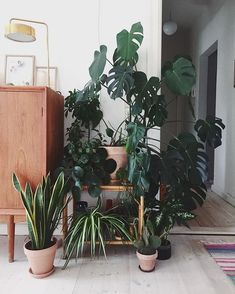 WEBSTA @ urbanjungleblog - Oh Anne, we  the view from your couch!   :@littlegreenfingers #urbanjunglebloggers #plantgang