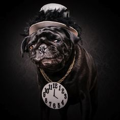 The_Pug_Life_Adorable_Portraits_Of_Lovable_Pugs_Dressed_As_Hip_Hop_Artists_2015_03