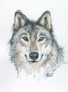 Watercolor Art Print featuring the painting Wolf by Olga Shvartsur