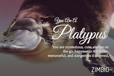 I took Zimbio's quirky spirit animal quiz and I'm a Platypus! What are you?....Bloody hell, it was spot on for me...
