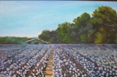 """I painted this oil of a cotton field-24x36"""""""