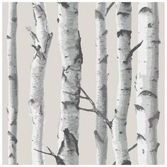 Wallpops 'Birch Tree' Peel & Stick Vinyl Wallpaper (5475 DZD) ❤ liked on Polyvore featuring home, home decor, wallpaper, backgrounds, art, fantasy background, text, saying, quotes and phrase