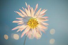 flowers, nature, plants, paper-cut, craft, secret garden, Laurianne Sainty