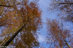 In der Natur unterwegs: Herbstwandern über dem Nebel Herbstwald - #Jura #wandern #Schweiz