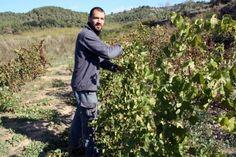 Els vins catalans cada cop tenen més sortida a l'exterior i la Generalitat de Catalunya, mitjançant el Departament d'Agricultura, Ramaderia, Pesca i Alimentació vol contribuir a que el ritme no pari.Segons Wine Industry Insight i l'Organització Internacional de la Vinya i el Vi, Alemanya (1.500 milions litres/any), Anglaterra (1.300 milions) i Estats Units (1.100 milions) ocupen els tres primers llocs quant a volum d'expotació. Els Països Baixos importen 400 milions de litres de vi per…