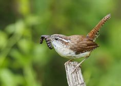 Gotcha! | by ShenandoahNPS | Shenandoah National Park, VA