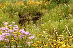 Legacy Prairie-pond