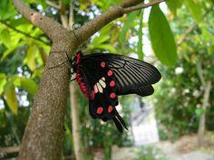 Vlinders Achtergronden | Barbara's Bureaublad Achtergronden in HD