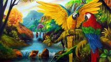 Paradise place parrots macraws animals wild