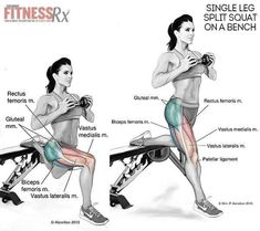 Bench squat,  thighs & glutes