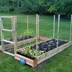 8 Magnificent Tricks: Pretty Vegetable Garden Square Feet fruit and vegetable garden thoughts.Vegetable Garden Cover Seed Starting vegetable garden art how to grow.Vegetable Garden Soil How To Grow. Small Vegetable Gardens, Vegetable Garden For Beginners, Vegetable Garden Design, Gardening For Beginners, Vegetable Gardening, Organic Gardening, Chicken Wire Fence, Deer Resistant Garden, Square Foot Gardening