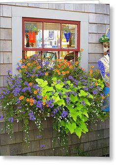 Sweet Potato Vine ... I want to do this on the sunroom windows - beautiful!