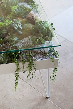 Terrarium coffee table, # coffee table - home decorating ideas Terrarium coffee table, table . table Always aspired to figure out how to knit, no. terrarium ideas Terrarium coffee table, # coffee table - home decorating ideas Indoor Garden, Indoor Plants, Indoor Outdoor, Home And Garden, Garden Art, Indoor Flowers, Patio Plants, Garden Plants, Nail Garden
