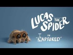 46 Best Lucus The Adorable Spider Images In 2019 Hand Spinning