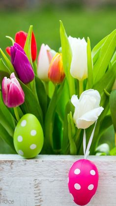 Tulips and Easter eggs Happy Easter, Easter Bunny, Easter Eggs, Boxing Day, Ostern Wallpaper, Orange Wallpaper, Holiday Wallpaper, Easter Pictures, Easter Cross