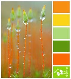 Citrus Dew - Orange, Yellow, Green  - Designcat Colour Inspiration Pallet