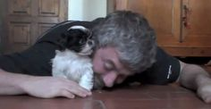This Shih Tzu puppy and his human are just adorable together. It's easy to tell they're best friends already!  Related: Playful pug and his owner get slap happy Dad's priceless reaction when he gets new puppy Adorable puppies tackle man