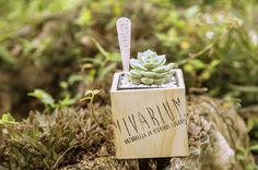 Wood Cube - Cubo de madera - Succulents https://www.facebook.com/vivariumnaturaleza