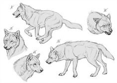Ych wolves 9 - sold by makangeni werewolf/anthro в 2019 г. Animal Sketches, Animal Drawings, Drawing Sketches, Art Drawings, Wolf Drawings, Draw Wolf, Wolf Poses, Wolf Sketch, Anime Wolf