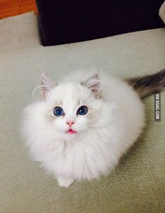 Even people who are not a cat person can't say this cat isn't adorable or beautiful.