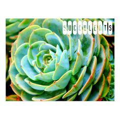 succulents or sometimes fat plants, are plants that have some parts that are more than normally thickened and fleshy, usually to retain water in arid climates or soil conditions.