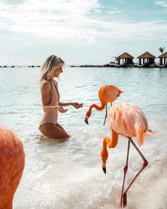 Flamingo beach is situated on a small island just off the coast of Aruba, one of the Lesser Antilles located in the sourthern Caribbean Sea. Flamingo Beach, Flamingo Cake, Flamingo Party, Cool Places To Visit, Places To Go, Sites Online, Hotel Secrets, Vacation Pictures, Aruba Pictures