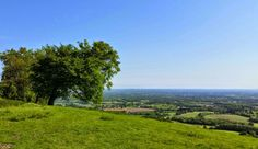 South Downs Walks, Chanctonbury Ring