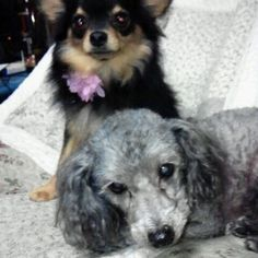 towa Dogs, Recipes, Animals, Animales, Animaux, Pet Dogs, Recipies, Doggies, Animal