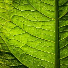 somewhere in the garden XIV by *JoannaRzeznikowska on deviantART