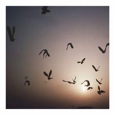 J O D H P U R sunrise, India. #ayu #ayurveda #ayuperfumeoils #perfume