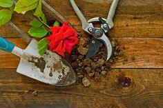 ***¿Cómo Plantar un Rosal?*** Aprende cómo acondicionar el suelo de tu jardín…