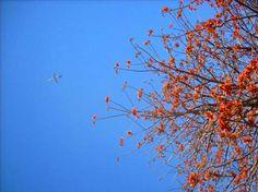 aula 2 - foto 03 - Jardim Botânico de Brasília - ênfase nas cores e texturas da natureza