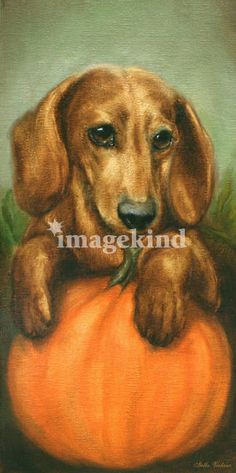 """""""Please Pick Me- a Dachshund Dog"""" by Stella Violano, California // Imagekind.com – Buy stunning, museum-quality fine art prints, framed prints, and canvas prints directly from independent working artists and photographers."""