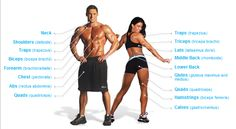 weight lifting body parts