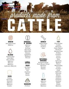 More than steak and milk, cattle provide so much to us while also returning value to the ecosystem through grazing. Livestock Farming, Agriculture Farming, Raising Cattle, Cream Horns, Show Cattle, Beef Cattle, Animal Science, Ranch Life, Bull Terrier Dog