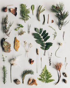 inspiring plant imagery. / sfgirlbybay