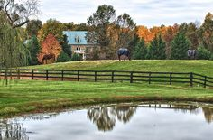 Pasture in Middleburg, VA by subcmdr, via Flickr
