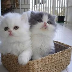 I want some kittens