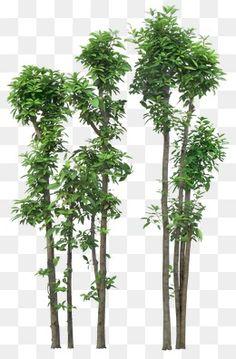 나무가 우거지다,나무 图层,绿植,고선명 큼 Architecture Graphics, Landscape Architecture, Landscape Design, Tree Photoshop, Orchid Tree, Mask Images, House Front Design, Screen Wallpaper, Background Images