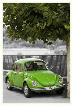 VW escarabajo verde _ green VW beetle | Flickr - Photo Sharing!