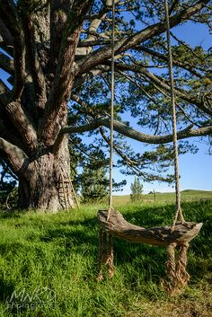 As a child, I could swing on one of these for what seemed like hours. Not a care in the world, flying as high as possible. As an adult I could still sit on one of these for hours, only I'd swing much slower, just breathing & taking in all the beauty of the countryside... the handiwork of God. Pure serenity.