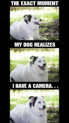 Yea I hate how my dog is so unphotogenic