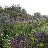 Bienenfreundliche Gartenstauden – Eine Liste vom Garten-Kollektiv